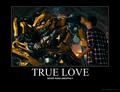 True Love Motivational - bumblebee-and-sam photo