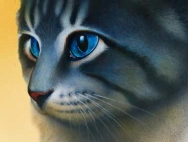 a cat from erin hunter and NOT sejak anyone else