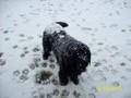my dog Max in the snow - fanpop-pets screencap