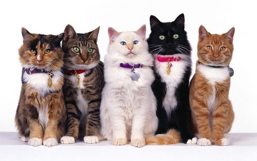 All in a row :) - cats Wallpaper