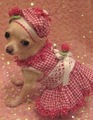 All ready for the Halloween Parties :) - all-small-dogs photo