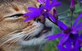 Cannot resist the pretty flowers - cats wallpaper