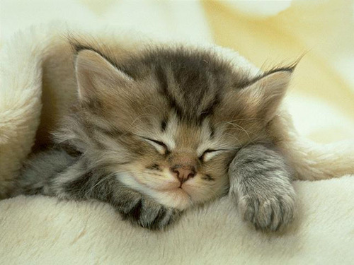 Cute Little Kitten - cute-kittens Wallpaper