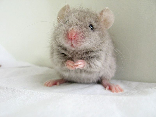 Cute mouse i found on the internet :D