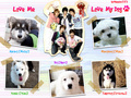 DBSK's Dogs - dbsk wallpaper