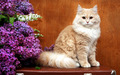 Flower Girl - cats wallpaper