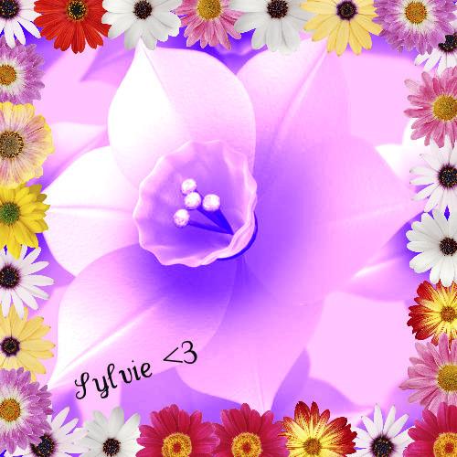 For My Dear Sylvie