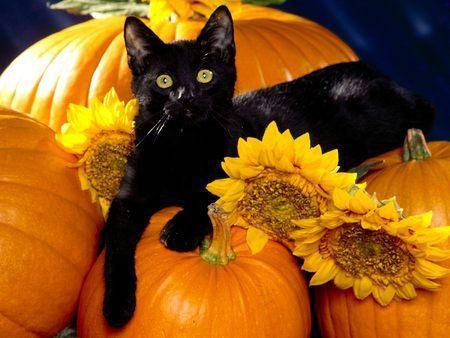 halloween gatos