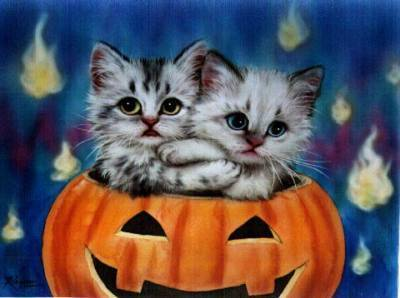 halloween kucing