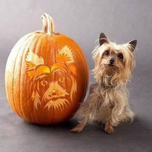 Хэллоуин Dog