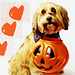 Halloween Dog - dogs icon