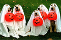 Halloween dogs for Berni & Frances :) - yorkshire_rose photo