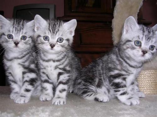 Kitten pic