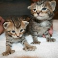 Kitten pic - cute-kittens photo