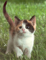 Kitten pics - cute-kittens photo
