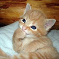Kitten pics
