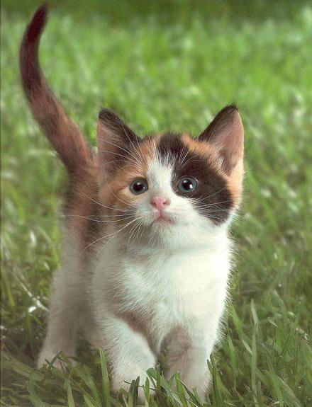 a 第一张图片上的猫咪比较可爱 b