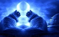 Romancing Night - cats wallpaper