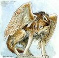 Winged wolves - winged-wolves photo