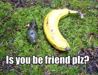 saging slug