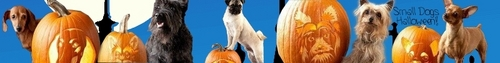 All Small chiens Halloween Banner