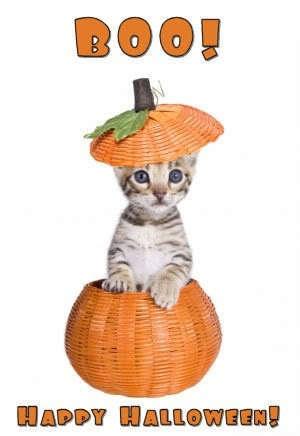 Halloween Kätzchen