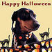 Happy Halloween Everyone - dogs icon
