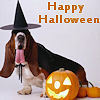 Dogs photo titled Happy Halloween