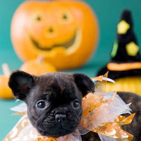 Puppies Images Happy Halloween Photo 16314506