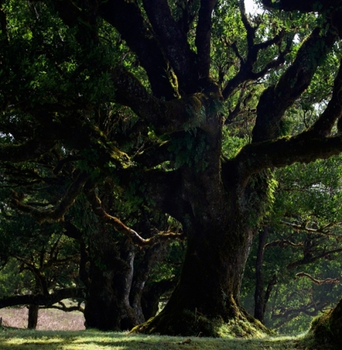 High pohon