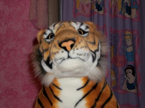 I have the big tiger