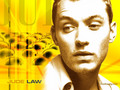 Jude Law  - jude-law wallpaper
