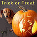 Trick or Treat - dogs icon