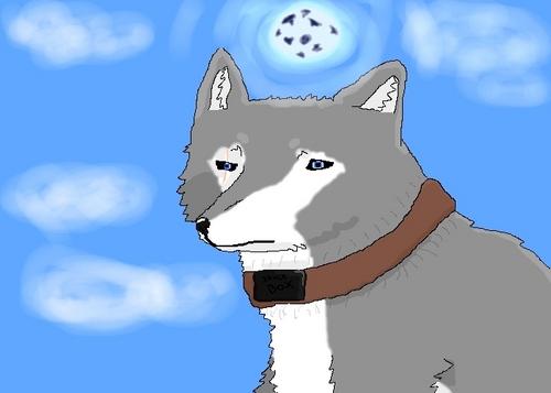 Tsume; The Gray chó sói, sói That Overcame Abuse