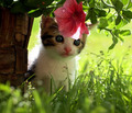 cute kittens - cute-kittens photo