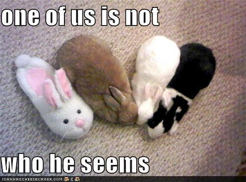silly animals - animal-humor Photo