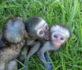 Ain't they the best?! - monkeys photo