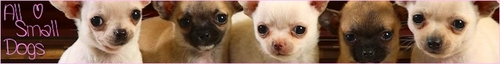 All Small Dogs Banner