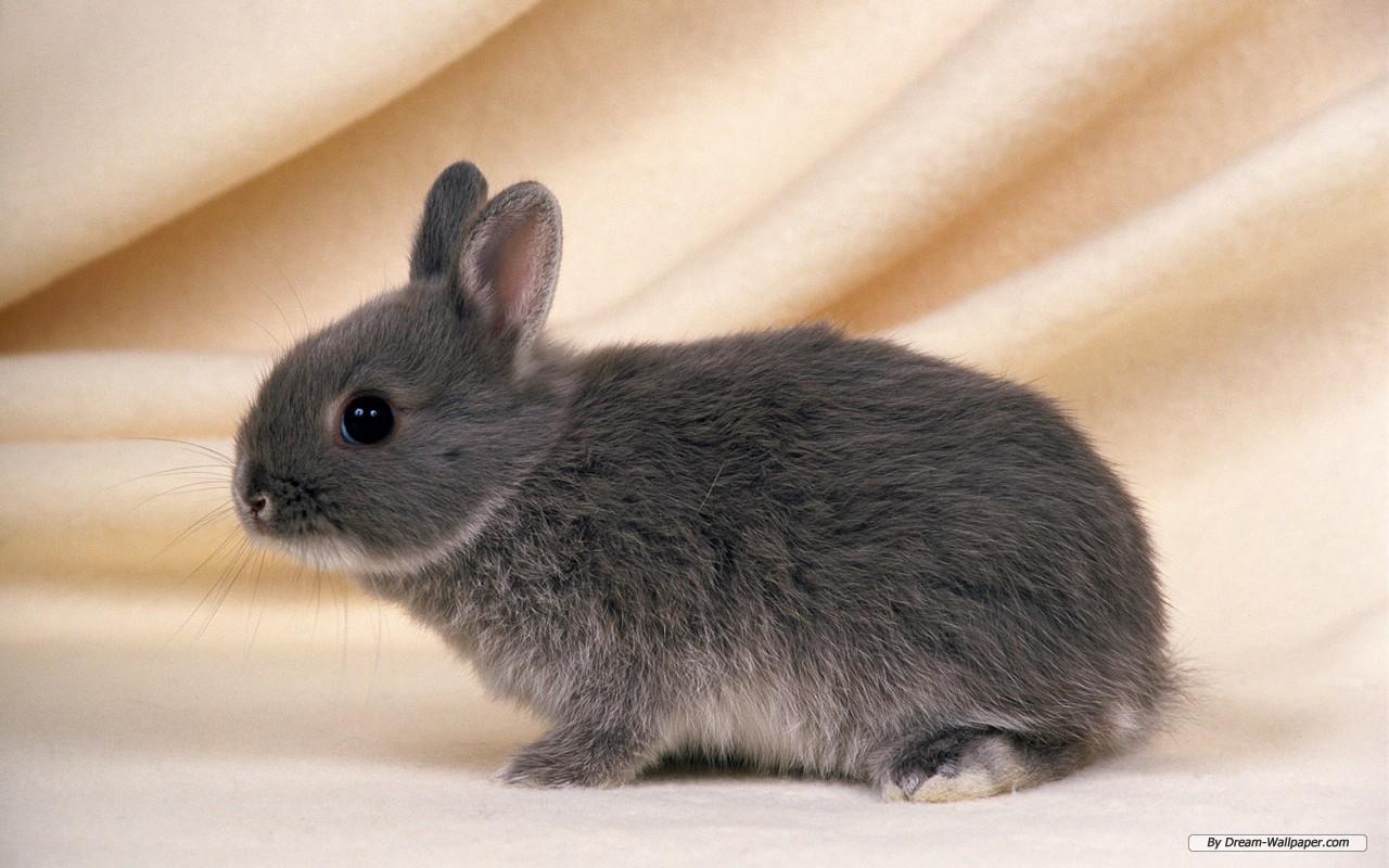 Bunny Net Worth