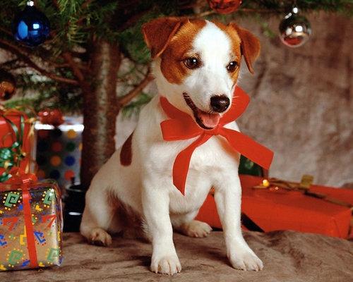 クリスマス time