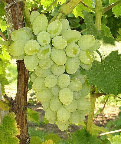Grapes!!!