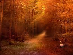 naranja forest