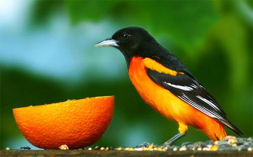 jeruk, orange mood!