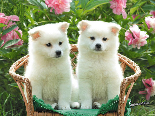 Puppies images Puppies HD wallpaper and background photos