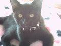 Sophie's Kitten
