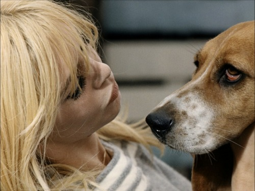 Brigitte Bardot karatasi la kupamba ukuta probably containing a basset entitled Sweet BB