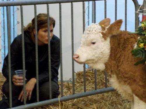 mirka federer and cow