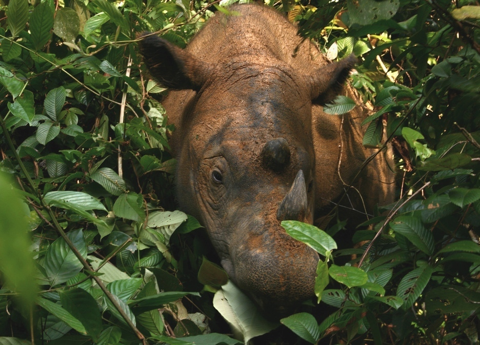 Image Result For Sumatra The Jungle Kingdoma
