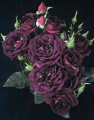 Autumn Roses for the most charming lady in the virtual world