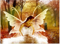Butterfly Angel